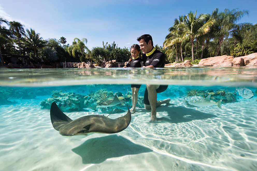 Stingrays - Photo courtesy of Discovery Cove 2016