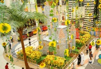 Sunflowers Al Wahda mall